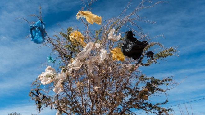 Why You Should Consider Ditching Plastic Bags