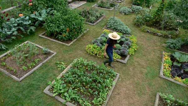 Tips to have your kitchen garden